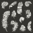 Feather Set — Imagen vectorial