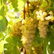 Stock Photo: Bunch of ripe yellow grapes