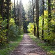Path through the trees in the forest — Stock Photo #13437637