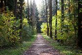 Caminho por entre as árvores na floresta — Fotografia Stock