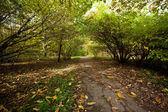 путь свисая кусты в лесу — Стоковое фото