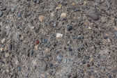 Fossil fragment with fine sea pebbles — Stock Photo