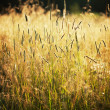 Tall grass in a field — Stock Photo