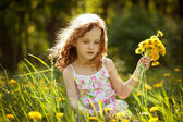 Girl gathers a bouquet of dandelions — Stock Photo