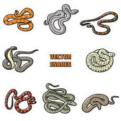 Vector snakes — Stockvektor
