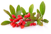 Ripe barberries on branch with green leaf — Stock Photo