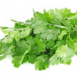 Stock Photo: Fresh leaves of cilantro