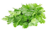 Fresh leaves of cilantro — Stock Photo