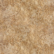 Seamless texture Coquina — Stock Photo