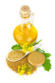 Mustard   in various appearance — Stock Photo