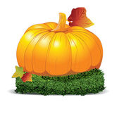 Beautiful orange pumpkin. Vector illustration. — Stock Vector