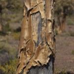 ������, ������: Tree trunk