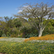 Kirstenbosch - Stock Photo