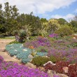Kirstenbosch Botanical Gardens - Stock Photo