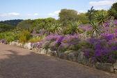 Kirstenbosch Gardens — Stock Photo