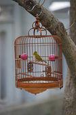 Caged songbird in the Yuen Po Street Bird Garden in Kowloon, Hong Kong. — Stock Photo