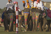 Polo de elefante — Foto de Stock
