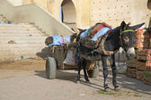 Donkey Cart — Stockfoto
