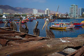 Pelicans on the Dockside — Stock Photo