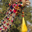 Постер, плакат: Decorated Camel