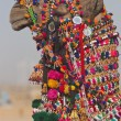 Decorated Camel — Stock Photo #9946038