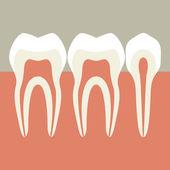 Illustration of teeth — Stock Vector