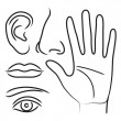 Sensory organs hand, nose, ear, mouth and eye - Stockvectorbeeld