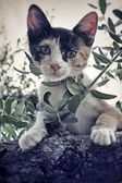 Cat on a tree — Stock Photo