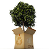 Green tree in a box — Stock Photo