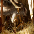 Donkey during a meal — Stock Photo