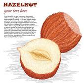 Hazelnuts — Stock Vector