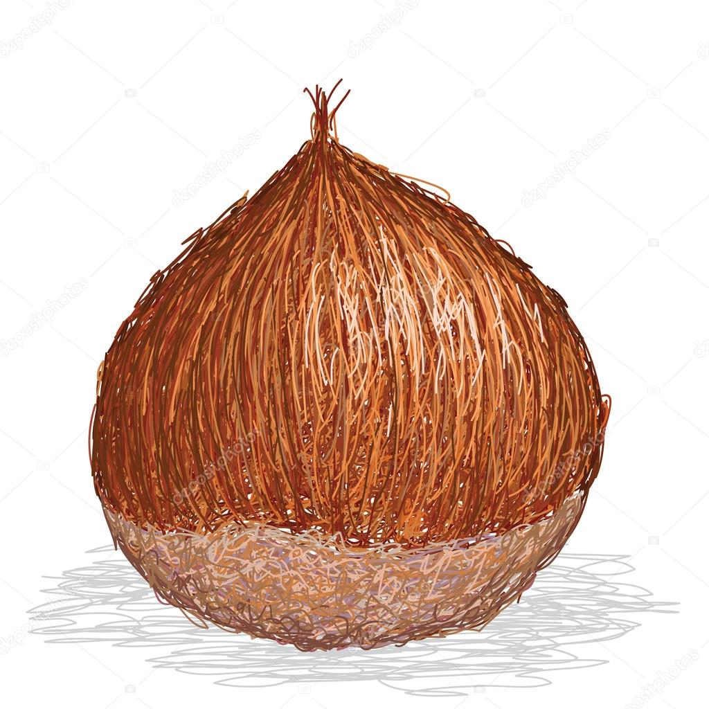 Closeup illustration of single chesnut isolated in white background. — Stock Vector #13672430