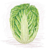 Napa cabbage — Vettoriale Stock
