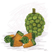 Pandanus fruit kernels — Stock Vector