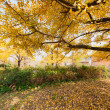 Beautiful autumn - Stock Photo