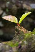 Młode liście z drzewa — Zdjęcie stockowe