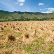 Stock Photo: Haystacks in farmland