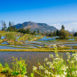 Terraced rice field landscape — Stock Photo #25315185