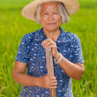 Stock Photo: Chinese peasant