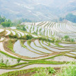 Terraced rice field — Stock Photo #25626557