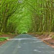 Stock Photo: Beech route