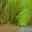 Stock Photo: Natural canopy