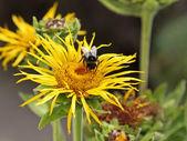 пчела на работе — Стоковое фото