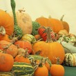 Pumpkins, Marrows and Squashes for sale — Stock Photo