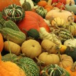 Stock Photo: Gourds on Display