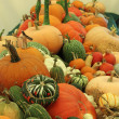 Stock Photo: Variety of Squashes
