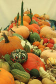 Variety of Squashes — Stock Photo