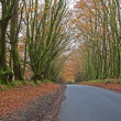 Beech Canopy — Stock Photo