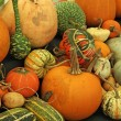 Stock Photo: Squashes Selection