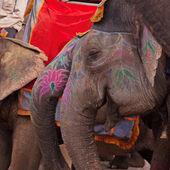 Zdobione słonie w amber, indie — Zdjęcie stockowe